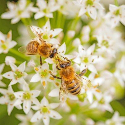music scene bees