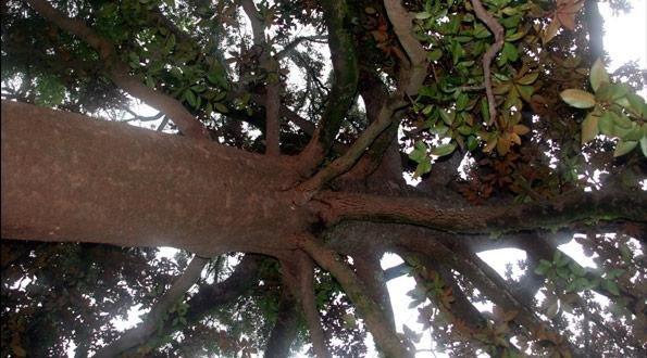 civilsociety-tree.jpg