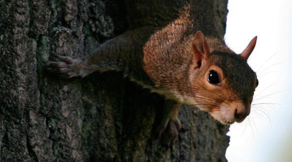 civilsociety-squirrel.jpg