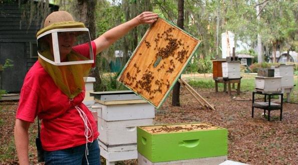 bees-288-29.jpg