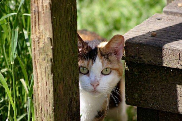 civil_society-feral_cat.jpg